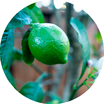 extracto bio de limón
